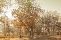 Fog in the morning in the park in Autumn in Kiev Royalty Free Stock Images