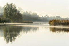 Misty autumn morning with reflections in the water. At Gentofte lake, Denmark Royalty Free Stock Images