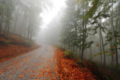Misty autumn path Stock Image