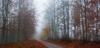 Misty autumn path Royalty Free Stock Photo