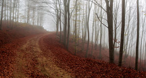 Misty autumn path Royalty Free Stock Photography
