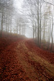 Misty autumn path Royalty Free Stock Images