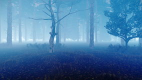 Misty autumn pine forest at dusk 4K. Motion through mysterious hazy pine forest at dusk or misty night. Ideal background for horror and Halloween. Low angle view stock illustration
