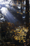 Misty autumn ray Royalty Free Stock Photography