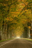 Misty autumn road