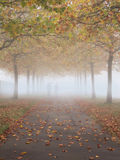 Misty autumn scene Royalty Free Stock Photo