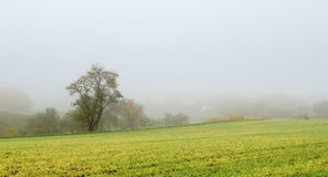 Misty autumn scenery Royalty Free Stock Photo