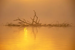 Misty Autumn Sunrise. Dry branches with ducks on misty autumn lake at sunrise stock photo