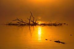 Misty Autumn Sunrise stock photo