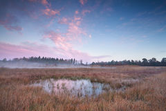 Misty autumn sunrise over swamp Royalty Free Stock Image