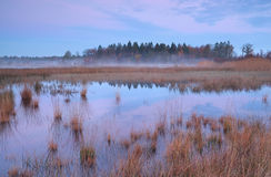Misty autumn sunrise over swamp in Mandefijld Royalty Free Stock Image