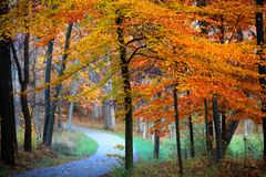 Misty autumn trail Royalty Free Stock Images