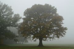 Misty autumn tree royalty free stock photos