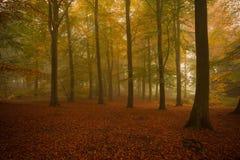 Misty Autumn Woodland Lizenzfreies Stockbild