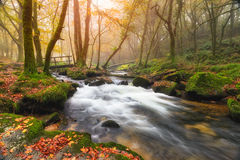 Misty Autumn Woods Stock Foto's
