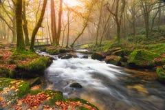 Misty Autumn Woods Stock Photos