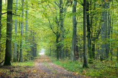 Misty autumnal ground road. By end of the day stock photography