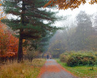 Misty autumnal park Royalty Free Stock Photography
