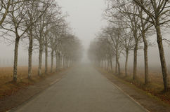 Misty Aveneu Stock Images