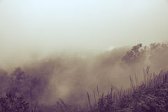 Misty Backgrounds. Misty landscape Backgrounds Plants and trees stock photo