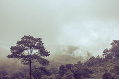 Misty Backgrounds. Misty landscape Backgrounds Plants and trees Royalty Free Stock Photo