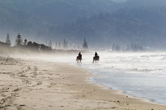 Misty beach. Horses in the misty beach, New Zealand royalty free stock images