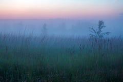 Misty Beautiful Nature Background Arkivfoto