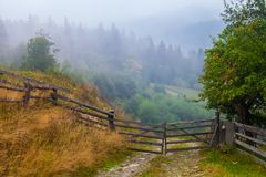 Misty beech forest on the mountain slope in a nature reserve Royalty Free Stock Photo