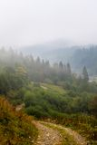 Misty beech forest on the mountain slope in a nature reserve Royalty Free Stock Photography