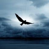 Misty bird in skies Stock Photos