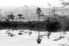Misty bog. Landscape with pool and reflections royalty free stock image