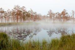 Misty bog landscape in Cena moorland, Latvia. Misty bog landscape with bog lake and reflections in water in Cena moorland, Latvia stock photos