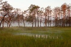 Misty bog landscape in Cena moorland, Latvia. Misty bog landscape with bog lake and reflections in water in Cena moorland, Latvia stock image