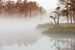 Misty bog landscape in Cena moorland, Latvia. Misty bog landscape with bog lake and reflections in water in Cena moorland, Latvia royalty free stock image