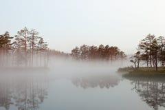 Misty bog landscape in Cena moorland, Latvia. Misty bog landscape with bog lake and reflections in water in Cena moorland, Latvia royalty free stock photography