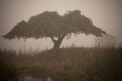 Misty Bog. Tree on a bog with bog house on a misty morning stock image