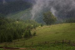 Misty Carpathian berglandskap med granskogen, blasten av träd som klibbar ut ur dimman arkivbilder