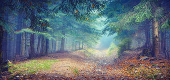 Misty Carpathian forest_vintage Stock Photography