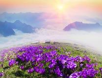 Misty Carpathian Sea Fotografia de Stock Royalty Free