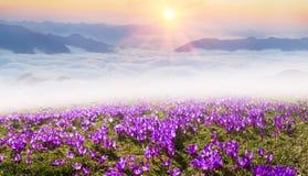 Misty Carpathian Sea Imagens de Stock Royalty Free