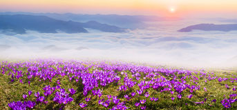 Misty Carpathian Sea Foto de Stock