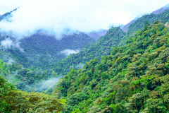 Misty Cloud Forest Stock Photography