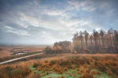 Misty clouded autumn morning over swamps and forest Stock Image