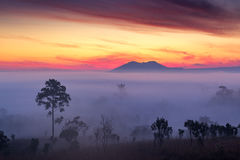 Misty Clouds beautiful Foggy forest during sunrise mountains Stock Photography