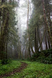 Misty Coast Hike. Hiking trail on the oregon coast Stock Image