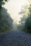 Misty cobbled road Stock Images