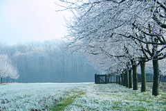 Misty and cold morning. Foggy landscape on the cold misty morning royalty free stock photo