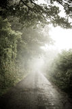 Misty Country Lane Royalty Free Stock Photos