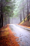Misty Country Road Stock Images