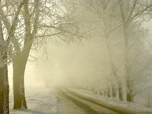 Misty country road at sunrise in winter. Slippery country road leading through forest in the winter with sunlight and mist around the trees. Morning fog and the Royalty Free Stock Images